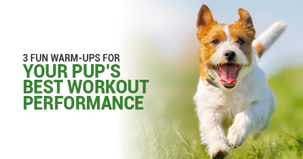 pup workout