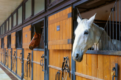 stable horses