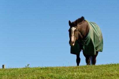 fleece blankets for horses