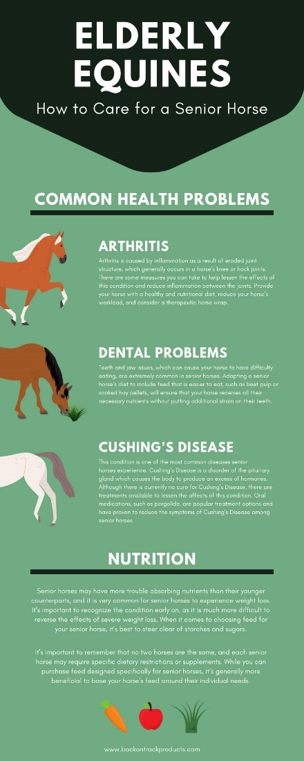 Elderly Equines How to Care for a Senior Horse infographic