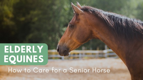 Elderly Equines How to Care for a Senior Horse